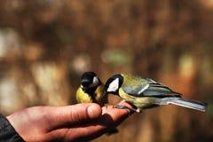在现有量的鸟 免版税库存照片