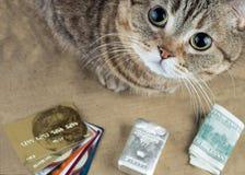 在现金货币、付款卡片和银条附近的一只猫 库存图片