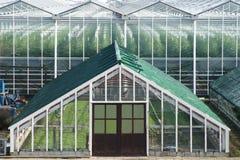 在现代上流一前面的一间老葡萄温室 免版税图库摄影