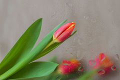 在现代中间影调的抽象背景装饰了红色郁金香,被弄脏的样式花  样式的精美色彩 免版税图库摄影