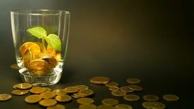 在玻璃瓶子和新芽绿色叶子的金黄硬币在黑背景的 转动,扭转,打旋,转动的便士 影视素材