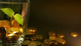 在玻璃瓶子和新芽绿色叶子的金黄硬币在黑背景的 转动,扭转,打旋,转动的便士 股票录像
