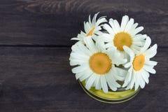 在玻璃瓶子特写镜头的春黄菊精油与雏菊 免版税库存图片