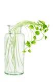 在玻璃瓶的新芽 库存图片