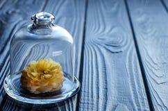 在玻璃盖帽下的生存花 库存图片