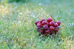 在玻璃碗的红色成熟樱桃果子 免版税图库摄影