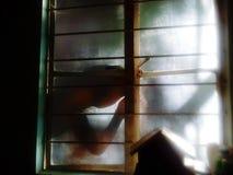 在玻璃窗的一个男孩外部看的阴影 图库摄影