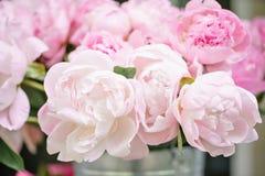 在玻璃花瓶的可爱的花 桃红色牡丹美丽的花束 花卉构成,场面,白天 墙纸 免版税库存照片