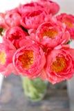在玻璃花瓶的可爱的花 牡丹类美丽的花束珊瑚魅力 花卉构成,场面,白天 墙纸 库存照片