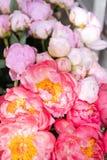 在玻璃花瓶的可爱的花 牡丹类美丽的花束珊瑚魅力 花卉构成,场面,白天 墙纸 图库摄影
