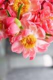 在玻璃花瓶的可爱的花 牡丹类美丽的花束珊瑚魅力 花卉构成,场面,白天 墙纸 Ve 库存图片