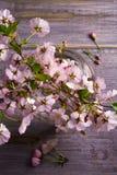 在玻璃花瓶的春天花束在葡萄酒木背景 桃红色花 春天开花 花束明亮的花照片向量 库存图片