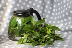 在玻璃茶壶的薄荷的茶有束的在短上衣的新鲜薄荷加点了灰色和白色织品背景 库存照片
