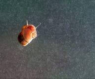 在玻璃表面的一只蜗牛。 免版税库存图片