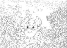 在珊瑚中的滑稽的螃蟹 库存照片