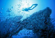 在珊瑚旁边的潜水者 免版税图库摄影