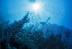 在珊瑚旁边的潜水者 库存图片