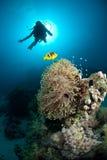 在珊瑚潜水员礁石水肺剪影之上 免版税图库摄影