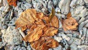 在珊瑚的一片死的叶子 免版税库存图片