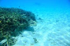 在珊瑚礁和白色沙子的出色的意见在水下 背景美好的横向 印度洋 库存照片