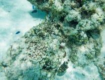 在珊瑚礁场面的看法 免版税库存图片