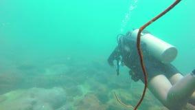 在珊瑚礁的一条石斑鱼鱼 影视素材