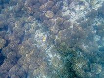 在珊瑚礁的五颜六色的鱼在阿曼海11 图库摄影