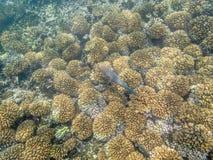 在珊瑚礁的五颜六色的鱼在阿曼海15 库存图片
