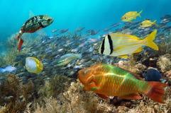 在海洋生活之下的水彩 免版税图库摄影
