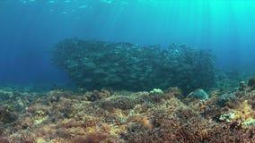 在珊瑚礁的大眼鲷Trevallies 图库摄影