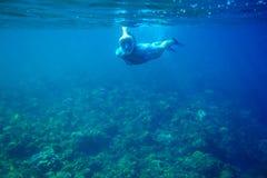 在珊瑚礁的妇女下潜 潜航在正面面具的女孩 废气管人水中照片 海里潜航的面具 免版税库存照片
