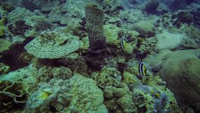 在珊瑚礁的小热带鱼 免版税库存照片