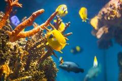 在珊瑚礁的异乎寻常的鱼 免版税库存图片