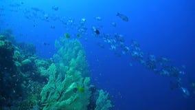 在珊瑚礁的攫夺者 影视素材