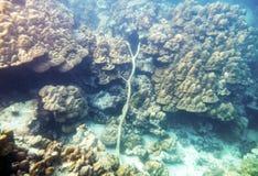 在珊瑚礁的木材木头 免版税库存图片