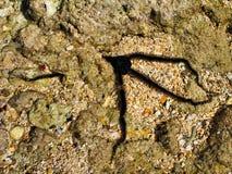 在珊瑚礁的海星。 库存照片