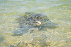 在珊瑚礁的海龟 图库摄影