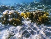 在珊瑚礁的热带鱼 异乎寻常的海岛岸浅水区 热带海滨风景水下的照片 库存照片