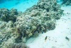在珊瑚礁的看法:新喀里多尼亚 图库摄影