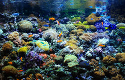 在珊瑚礁的许多小鱼 图库摄影