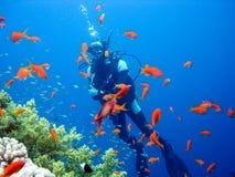 在珊瑚礁的轻潜水员 背景男孩潜水查出屏蔽水肺微笑的白色 库存照片