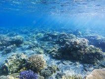 在珊瑚礁的阳光 异乎寻常的海岛岸浅水区 热带海滨风景水下的照片 免版税库存照片