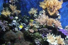 在珊瑚礁的鱼 免版税库存照片