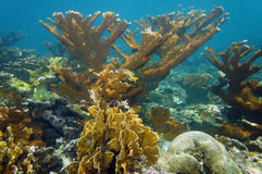 在珊瑚礁的水下的风景 图库摄影
