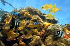 在珊瑚礁的兴旺的海洋生活 免版税库存照片