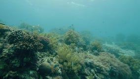 在珊瑚礁附近的热带鱼游泳在海底 潜水在深海的轻潜水员 在珊瑚和鱼的潜水者游泳 股票录像