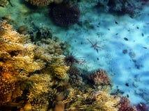 在珊瑚飞行之上 免版税库存照片