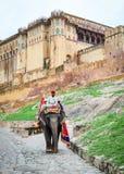 在琥珀色的堡垒的一头人骑马大象在斋浦尔,印度 免版税库存照片