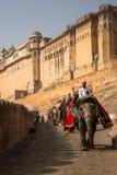 在琥珀色的堡垒的大象游览 免版税库存照片
