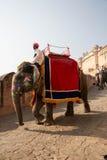 在琥珀色的堡垒的大象游览 图库摄影